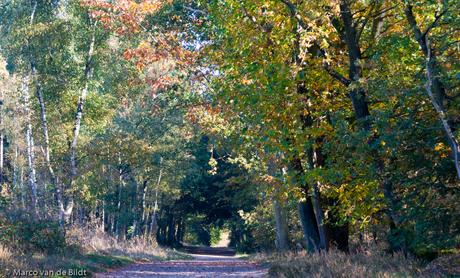 herfst, Utrechtse heuvelrug