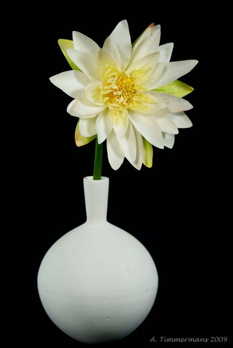 Mooie bloem in vaas