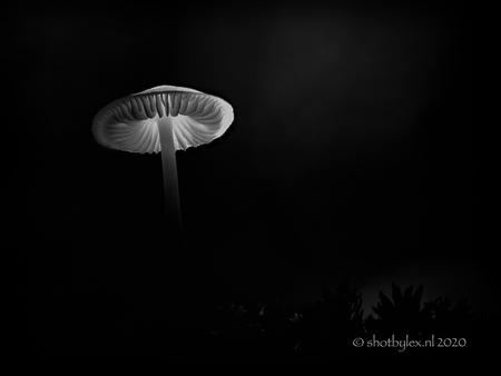 Minimalism - Heel klein plooirokje, uitgelicht met ee fietslampje in de schemering van het bos. - foto door meneerlex op 26-10-2020 - deze foto bevat: macro, wit, licht, paddestoel, zwart