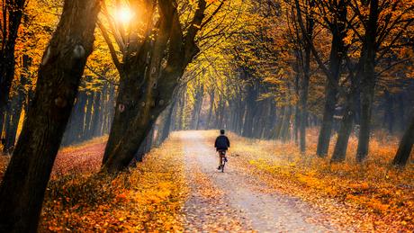 Herfstkleuren in het Amsterdamse Bos