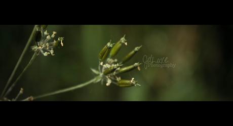 Meer bloemknopjes