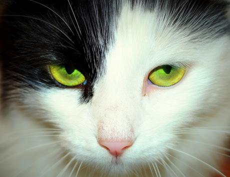 KittyF.jpg