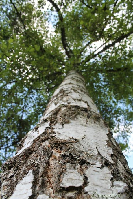 Boompje (ippawards schoolopdracht fotografie: ''Trees')
