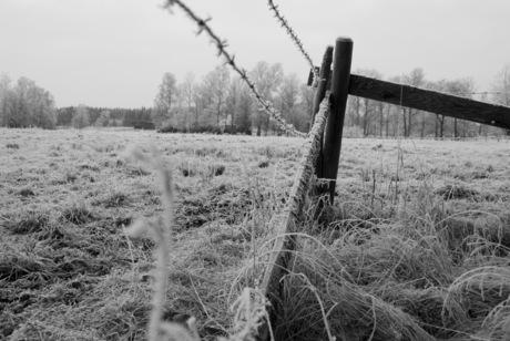 winters hekwerk