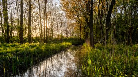 Watertje in het bos - Tijdens de avondwandeling in het bos, kwam ik dit slootje tegen. De zon zorgde voor een fijn uitzicht. - foto door lbfoot op 15-04-2020 - deze foto bevat: groen, lente, natuur, geel, zonsondergang, voorjaar, nederland, s-gravenzande, staelduinse bos, zuid-hollands landschap