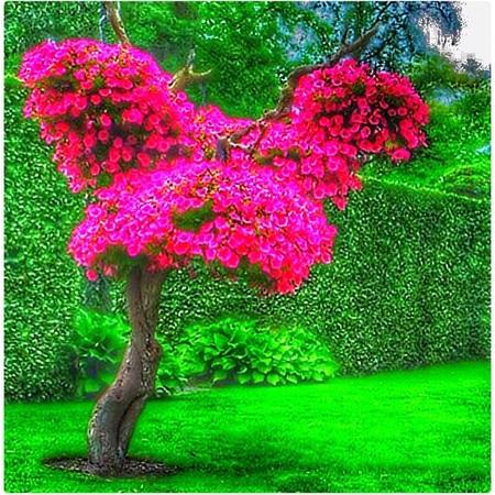 boom met planten - HDR - foto door Rosina op 28-06-2015 - deze foto bevat: macro, zon, boom, bloem, blad, bewerkt, zomer, bewerking, sfeer, hdr, bewerkingsopdracht