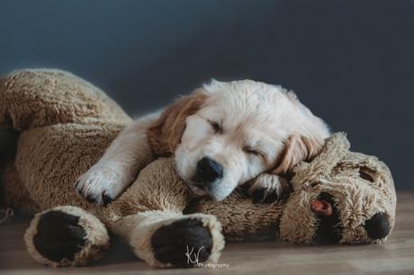 Service Puppy Ygor