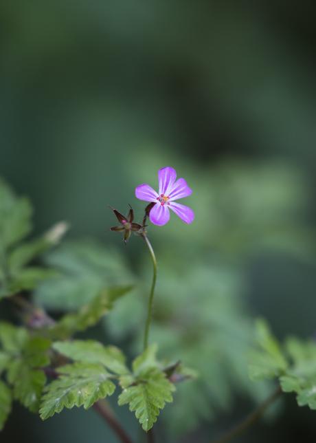 eenzaam bloemetje