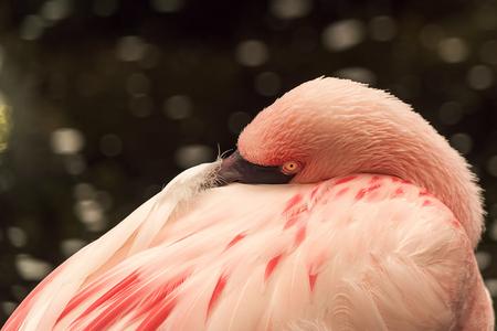 flamingo - bedankt voor alle vorige reacties. - foto door john68 op 27-04-2016 - deze foto bevat: water, dierentuin, natuur, dieren, vogel, watervogel, wildlife