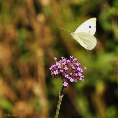 witje in de vlucht