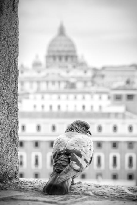 Birdview on Rome