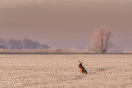 Haas in een winters tafereel