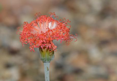Mooie bloem