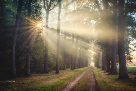 Sunrays