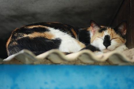 Mapendo slaapt op het dak