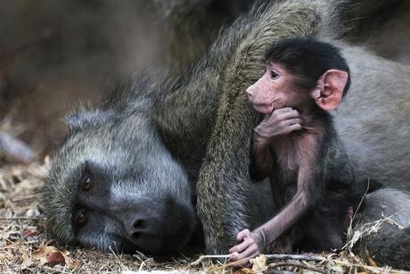 aap met jong kl.jpg