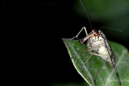 eng beestje - eng beestje - foto door Tammy op 30-04-2012 - deze foto bevat: macro, natuur, geel, zwart, vliegen, insect, beest