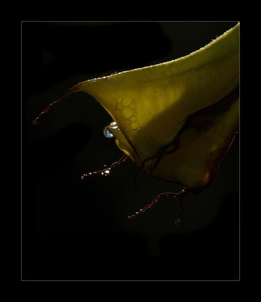 Blue drop - - - foto door stanga op 27-01-2009 - deze foto bevat: stanga