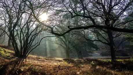 Zichtbaar licht in het bos bij Hilversum