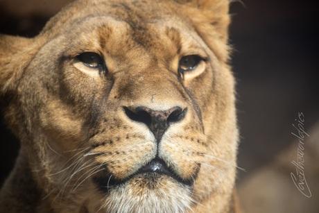leeuwin artis