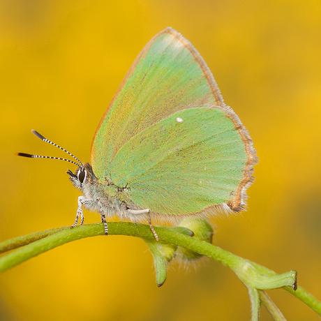 Groen Geel