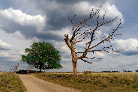 Dode boom in het Deelerwoud