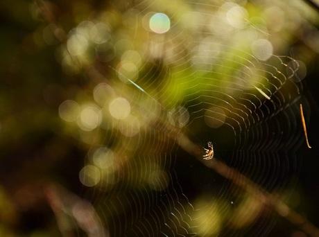 Spider versus Bokeh