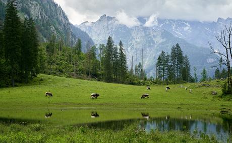 Alpen weide