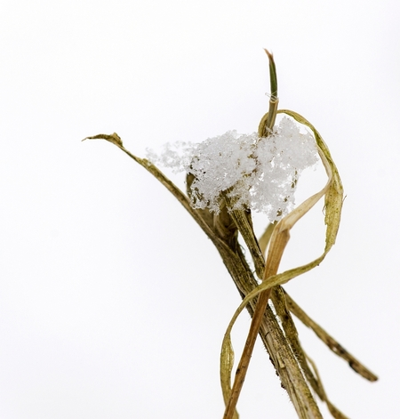 Even met de macrolens op...... - pad, naar stadspark vandaag. Had eerder nog geen tijd gehad hiervoor, dus toen er vanmorgen weer wat sneeuw lag, zag ik mijn kans schoon. De witte a - foto door Jozeeke op 10-02-2013 - deze foto bevat: jozeeke, sneeuwmacro