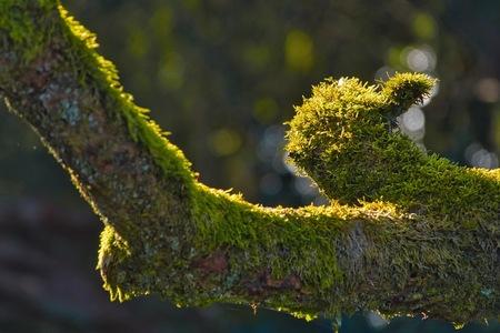 Mossculptuur - In het natuurgebiedje Kampsheide zag ik deze moscreatie. Het doet mij denken aan een vogel......  Bedankt voor het bekijken en de reacties op mijn  - foto door JerPet op 06-03-2021 - deze foto bevat: groen, macro, licht, mos, bokeh
