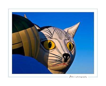 The cat's eyes - In Joure zijn er deze week ballonfeesten. Ze duren van 23 t/m 27 july. Er komen 35 ballonnen vanuit de gehele wereld, heel bijzonder zijn de zgn. spe - foto door Piebe op 25-07-2008 - deze foto bevat: kat, friesland, balon, joure, ballonfeesten