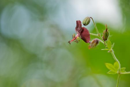 Donkere Ooievaarsbek 4 - Deze mooie bloemetjes van alle kanten bekeken en vast gelegd... Niet makkelijk om uit een veld , geschikte kandidaten te vinden...Alle bloemetjes zij - foto door dettyverbon op 25-05-2014 - deze foto bevat: bloem
