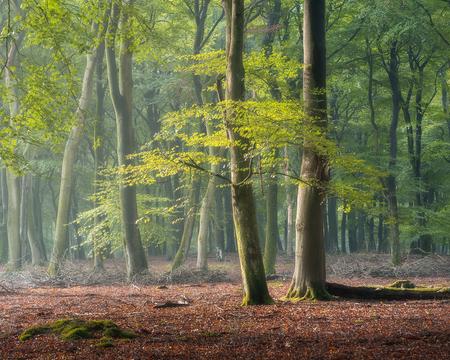 Dancing in the Light - Na mijn vorige donkere upload nu een lekkere lichte en luchtige plaat. Aan het eind van die ochtend kwam de zon er nog even bij en dat zorgt dan weer - foto door Dennismulder55 op 20-10-2020 - deze foto bevat: veluwe, licht, landschap, bos, zonsopkomst, bomen, gelderland, Bosfotografie