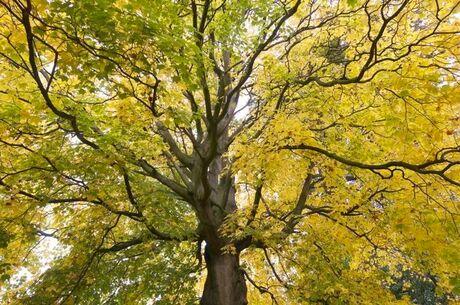 green to yellow.jpg