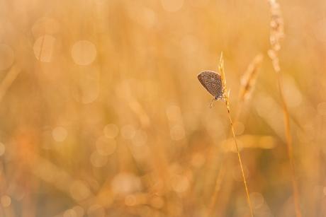 De morgenstond heeft goud in de mond....