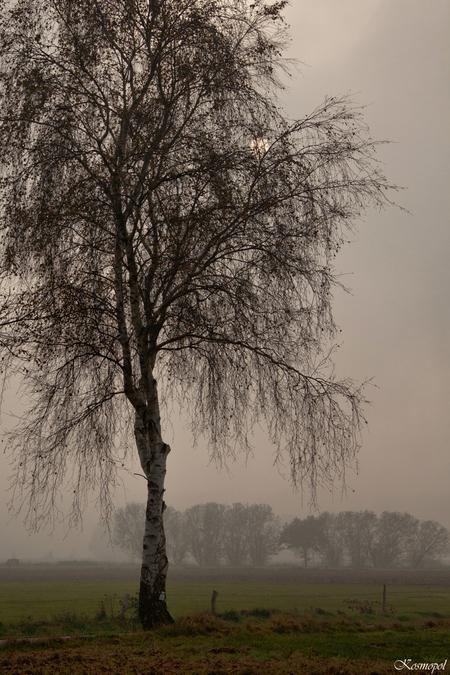 Zie de zon schijnt doo-oor de boomen... - ... makkers staakt uw wild geraas... Het is weer bijna zo ver he... voor deze jongen lang geleden, ik ken de tekst niet meer zo goed. Heb nog eens  - foto door kosmopol op 25-11-2011 - deze foto bevat: boom, mist, kosmopol