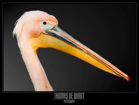 Vreemde vogel 1