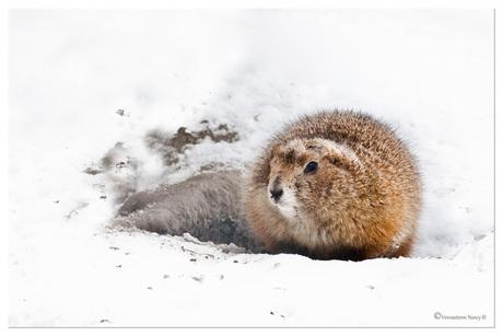 brrr koud