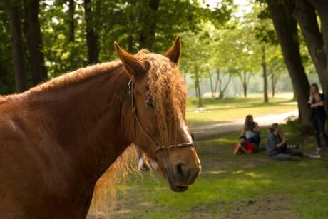 paard op de fotofair 2016