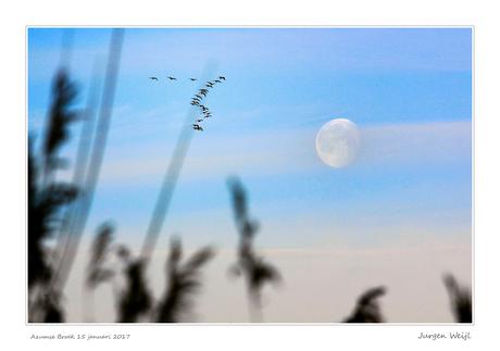 Maan en trekvogels