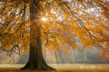 The Golden Tree...