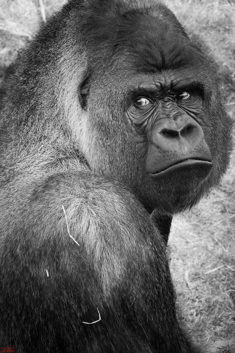 Monkey glamour