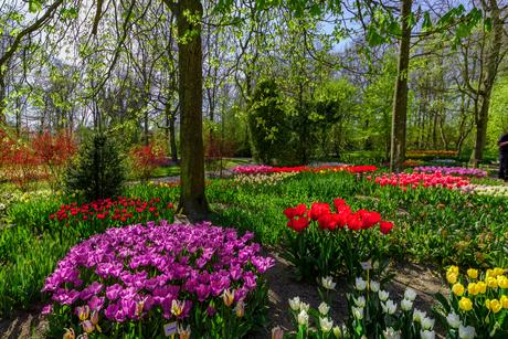 park in Anna paulowna