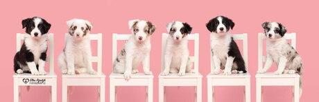 Zes schattige pups