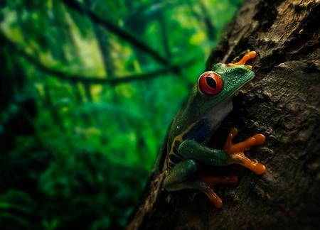 RedeyedtreeFrog - Deze foto is gemaakt met een Laowa 15mm wideangel Macro - foto door marcojongsma op 16-06-2020 - deze foto bevat: groen, macro, wit, zon, kikker, natuur, licht, tegenlicht, zomer, dauw, dof, wideangelmacro