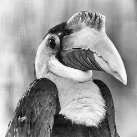 Neushoornvogel - Mentoraat 3