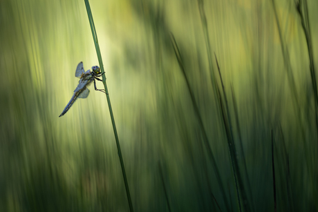 Between the grasses
