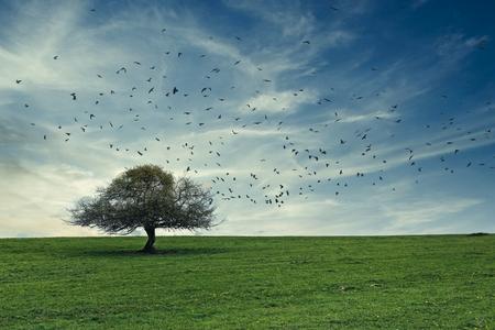 de boom - - - foto door onne1954 op 15-04-2021 - locatie: Frankrijk - deze foto bevat: boom, vogels, landschap, gras, luchten, wolk, lucht, fabriek, ecoregio, natuurlijk landschap, natuurlijke omgeving, vogel, mensen in de natuur, gras, boom