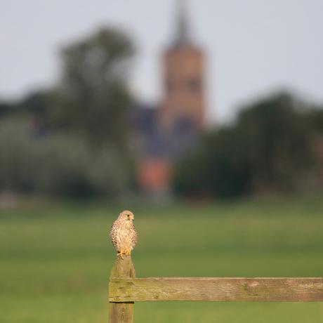 (kerk)Torenvalk