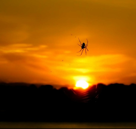 Spin en zonsondergang